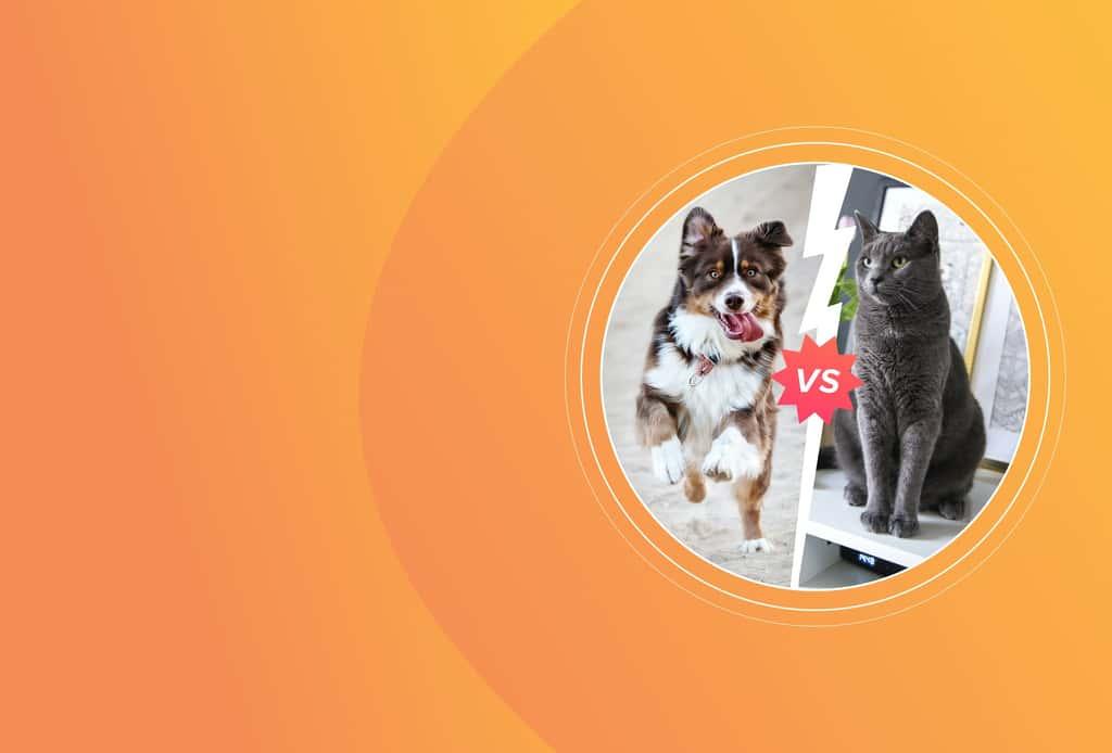 [Исследование] Кошки против собак: кого предпочитают пользователи сети
