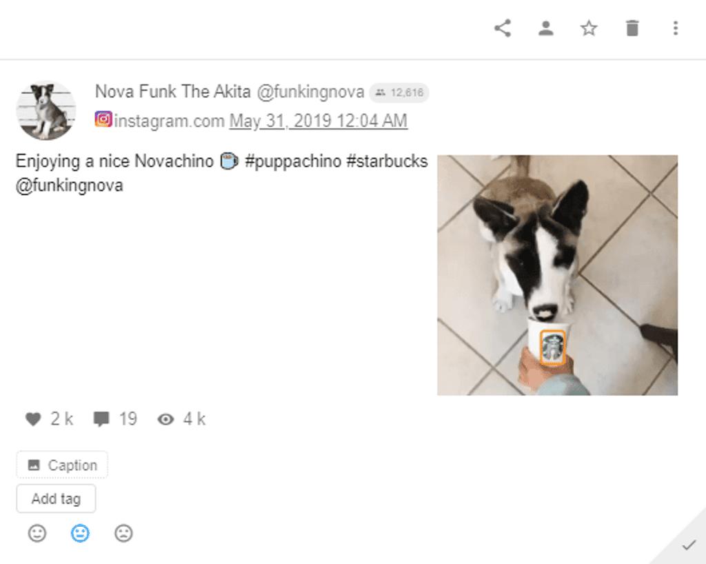 Starbucks - Instagram Post - Dog